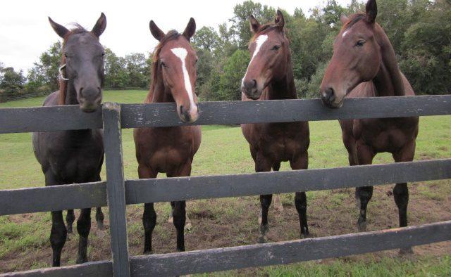 Hearts Desire Farm LLC